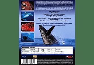 Ozeane dieser Welt Blu-ray