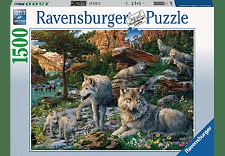 RAVENSBURGER Wolfsrudel im Frühlingserwachen Erwachsenenpuzzle Mehrfarbig
