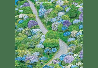 Fiddlehead - Between The Richness  - (CD)