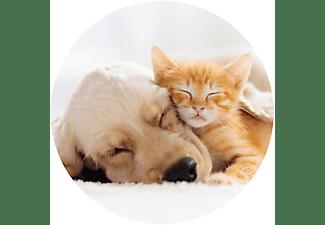 POPSOCKETS Phone Grip & Stand, Basic - Cat & Dog