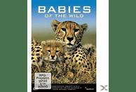 BABIES OF THE WILD [DVD]