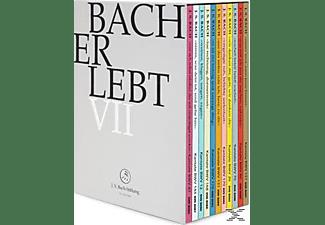 Rudolf Lutz / J.S. Bach-Stiftung - Bach Erlebt Vii  - (DVD)
