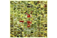 Dalhous - Will To Be Well [CD]