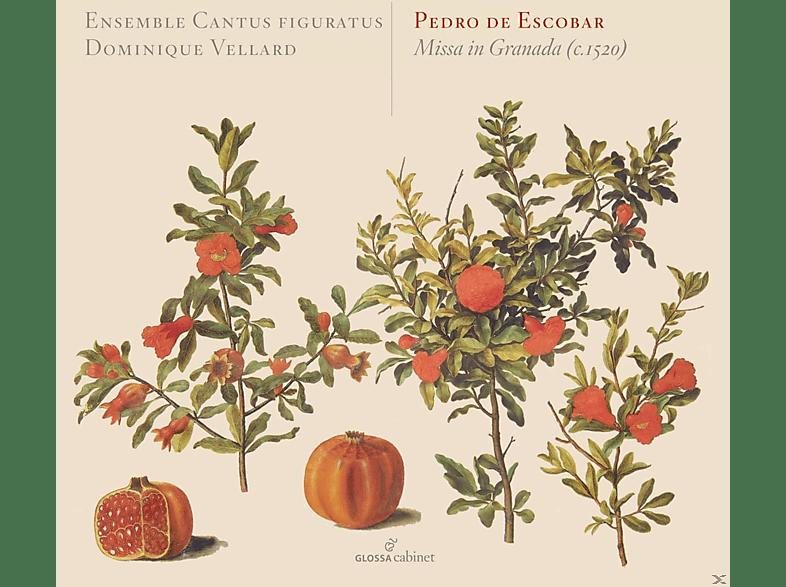Ensemble Cantus Figuratus - Missa In Granada (Missa 4vv) [CD]