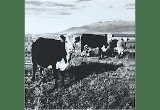 Mark Kozelek - The Finally Lp  - (CD)