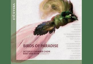 VARIOUS - Birds Of Paradise  - (CD)