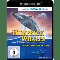 Humpback Whales [4K Ultra HD Blu-ray]