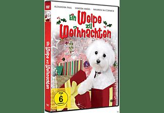 Ein Welpe zu Weihnachten DVD