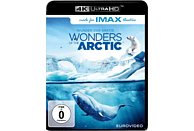 Wonders of the Arctic [4K Ultra HD Blu-ray]
