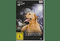 Tierisch Extrem - Die Top 10 der Tierwelt - Vol. 3: Superhunde [DVD]