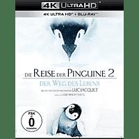 Die Reise der Pinguine 2 - Der Weg des Lebens [4K Ultra HD Blu-ray + Blu-ray]