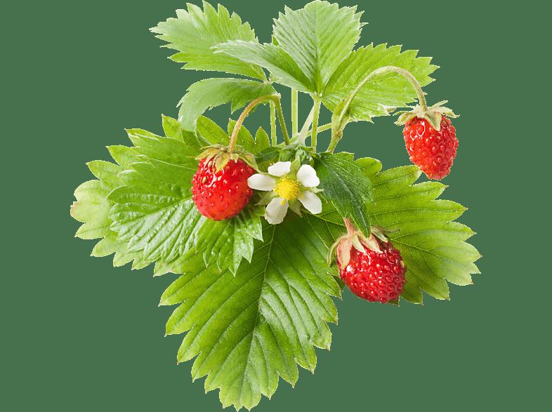 EMSA 600060 Click & Grow Wilde Erdbeere Substratkapsel