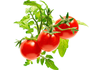 EMSA Click & Grow Mini Tomate