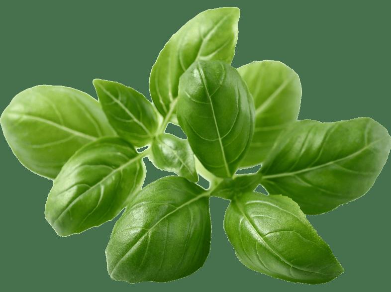 EMSA 600060 Click & Grow Basilikum Substratkapsel