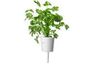 EMSA 600064 Click & Grow Koriander Substratkapsel
