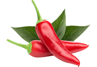 EMSA 600058 Click & Grow Chili Pepper Substratkapsel Weiß