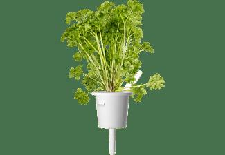 EMSA 600061 Click & Grow Petersilie Substratkapsel Weiß