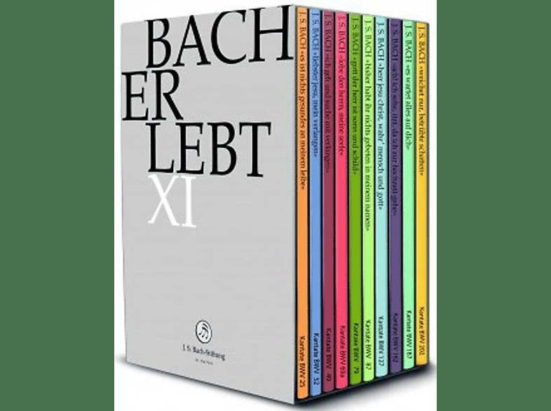 Chor & Orchester Der Johann Sebastian Bach Stiftung - BACH ERLEBT XI [DVD]
