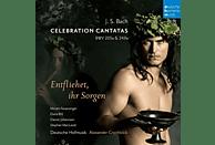 Elvira Bill, Stephan Macleod, Deutsche Hofmusik, Miriam Feuersinger, Daniel Johannsen, VARIOUS - Celebration Cantatas BWV 205a & 249a-Entfliehet [CD]