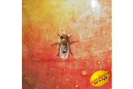 Alex Miksch - Nur a Opfe [CD]