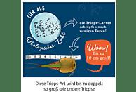 KOSMOS Triops-Giganten Experimentierkasten, Mehrfarbig