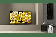 SONY KD-49XG8096 LED TV (Flat, 49 Zoll/123 cm, UHD 4K, SMART TV, Android TV)