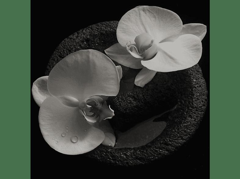 Mike Patton, Jean-Claude Vannier - Corpse Flower (LP+MP3,Coloured) [LP + Download]